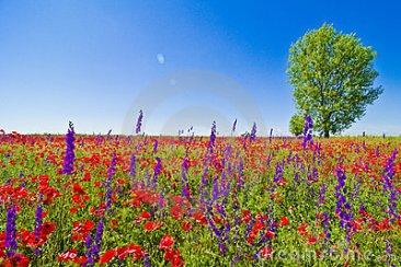 wildflowers field 1