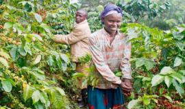 coffee-growers