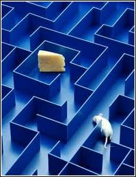 Mouse maze-2