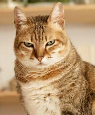 Disputatious cat