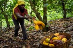 Ghana-cocoa-farmers
