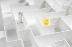 Mouse maze-1