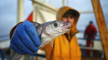 Fish Quota